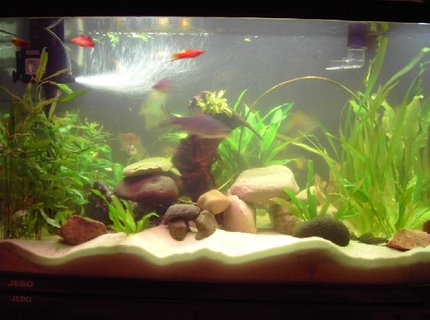 260 gallons freshwater fish tank (mostly fish and non-living decorations) - live plants and rocks
