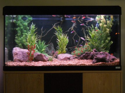 53 gallons freshwater fish tank (mostly fish and non-living decorations) - 200 litre