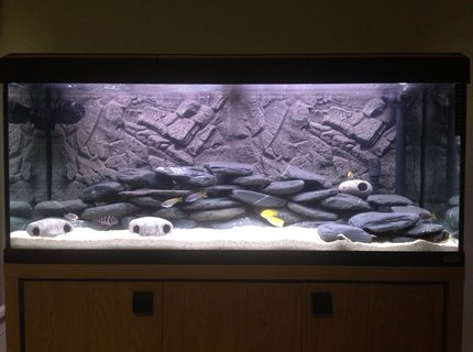 50 gallons freshwater fish tank (mostly fish and non-living decorations) - Malawi setup