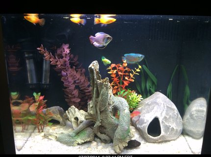 14 gallons freshwater fish tank (mostly fish and non-living decorations) - Coralife biocube