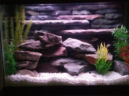 20 gallons freshwater fish tank (mostly fish and non-living decorations) - 20 Gallon freshwater tank with custom 3D background and rockscape. Uses two aquaclear 50 gallon HOB filters and heater incorporated into the 3D background.  This tank was a lot of fun to build and goes to show you can do a lot with small spaces.