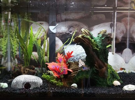 20 gallons freshwater fish tank (mostly fish and non-living decorations) - It works for now, until I decide to upgrade.