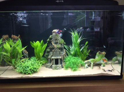 20 gallons freshwater fish tank (mostly fish and non-living decorations) - My 20 Gallon.