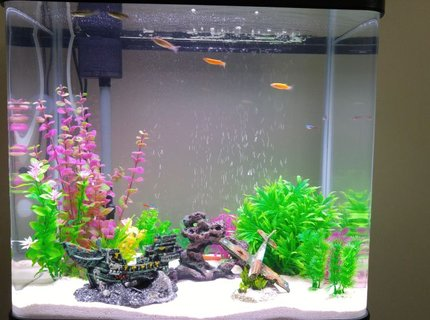 20 gallons freshwater fish tank (mostly fish and non-living decorations) - 20 gallon freshwater tank with white sand as substrate and some decorations