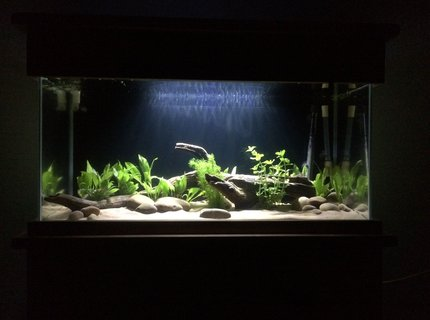 53 gallons freshwater fish tank (mostly fish and non-living decorations) - 200litre 