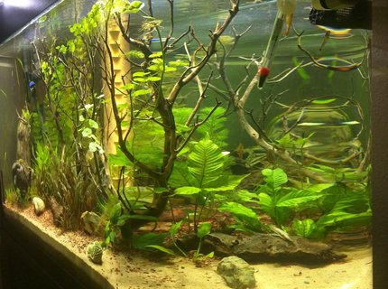70 gallons freshwater fish tank (mostly fish and non-living decorations) - 70g Bullnose tank