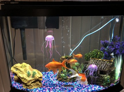 36 gallons freshwater fish tank (mostly fish and non-living decorations) - 36g Bow Front with 4 goldfish won from a fair and a minnow saved from my creek