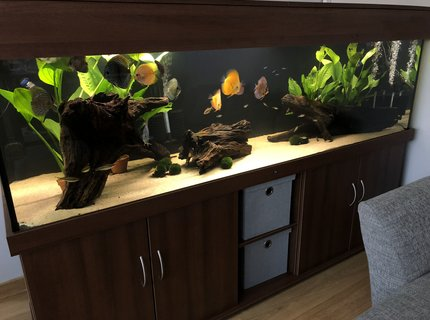 210 gallons freshwater fish tank (mostly fish and non-living decorations) - New 7ft tank