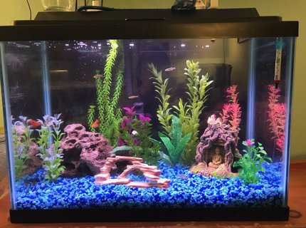 20 gallons freshwater fish tank (mostly fish and non-living decorations) - Front view