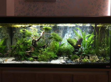 63 gallons freshwater fish tank (mostly fish and non-living decorations) - The Realm