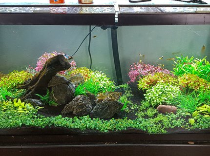 75 gallons freshwater fish tank (mostly fish and non-living decorations) - 75 gallon with fancy mollies.  All artificial. Fx6 filter.  Low bioload.  Water change once every other week.