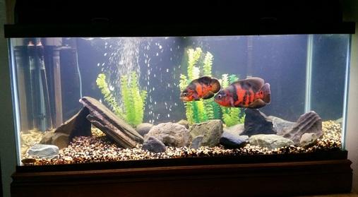 Acrylic Aquariums Ratemyfishtank Com