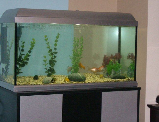 25 gallons freshwater fish tank (mostly fish and non-living decorations) - The whole tank.. really dull and boring I know :(
