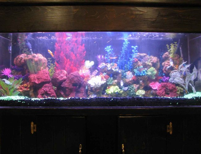 60 gallons freshwater fish tank (mostly fish and non-living decorations) - i restored this tank from ground zero. this tank looks alot better in person.