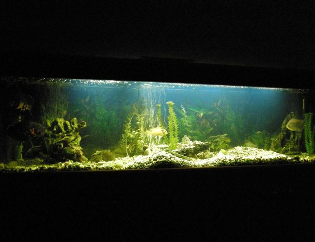 78 gallons freshwater fish tank (mostly fish and non-living decorations) - 300 liter Cichlid Tank