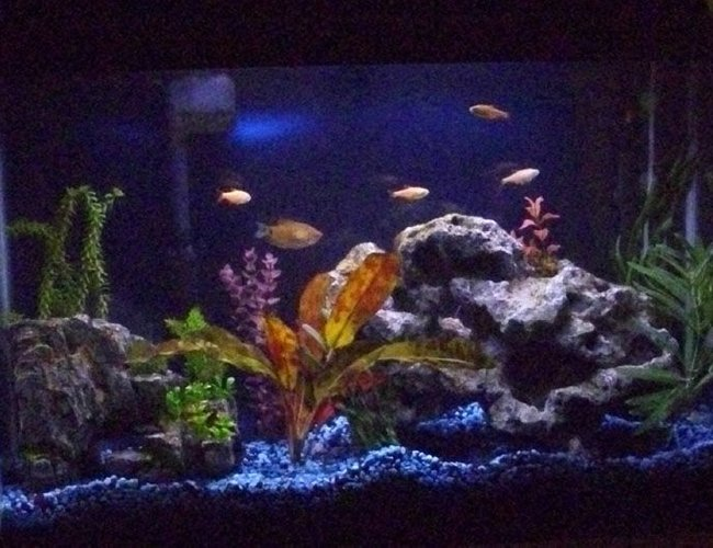 45 gallons freshwater fish tank (mostly fish and non-living decorations) - First posted pic
