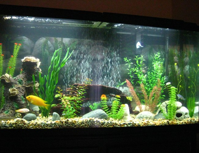 60 gallons freshwater fish tank (mostly fish and non-living decorations) - New Tank.