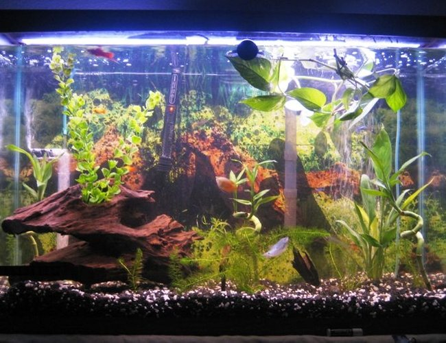 45 gallons freshwater fish tank (mostly fish and non-living decorations) - 45 gallon tank 