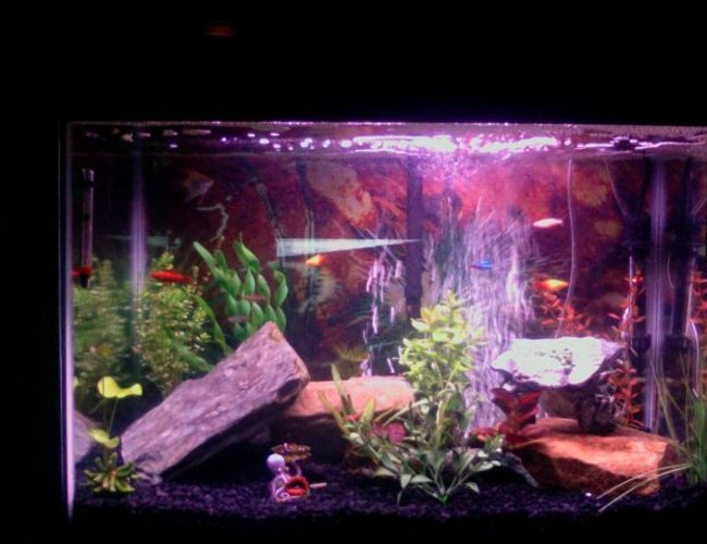 45 gallons freshwater fish tank (mostly fish and non-living decorations) - 10 fish and more coming!