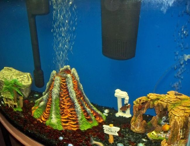50 gallons freshwater fish tank (mostly fish and non-living decorations) - right sided view