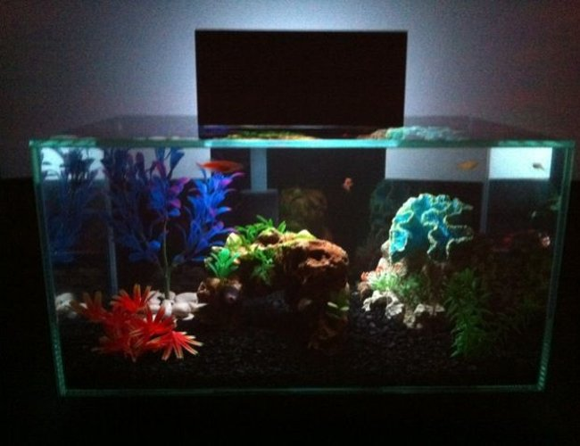 6 gallons freshwater fish tank (mostly fish and non-living decorations) - Fluval Edge w/LED Multicolor Mod