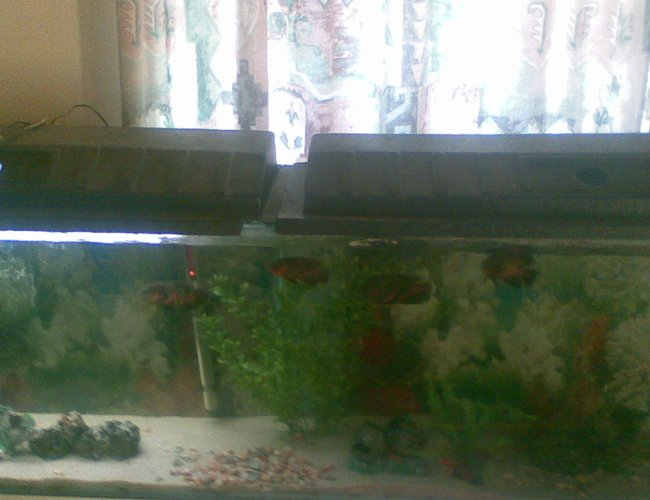 79 gallons freshwater fish tank (mostly fish and non-living decorations) - 79 gallon tank