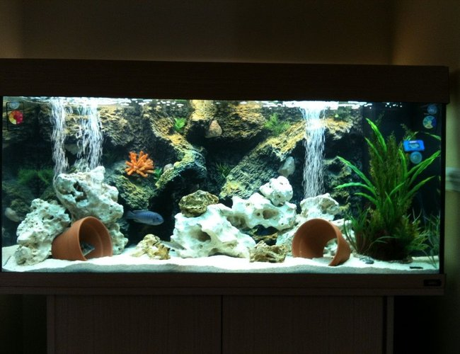 50 gallons freshwater fish tank (mostly fish and non-living decorations) - my juwel rio180 malawi cichlid tank setup