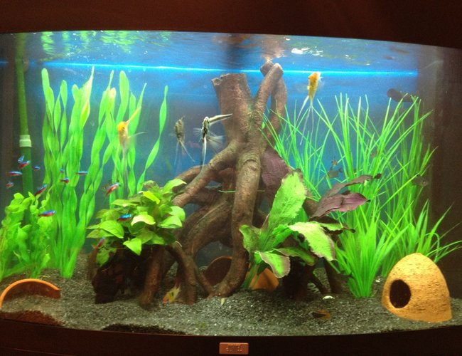 45 gallons freshwater fish tank (mostly fish and non-living decorations) - Juwel vision 180