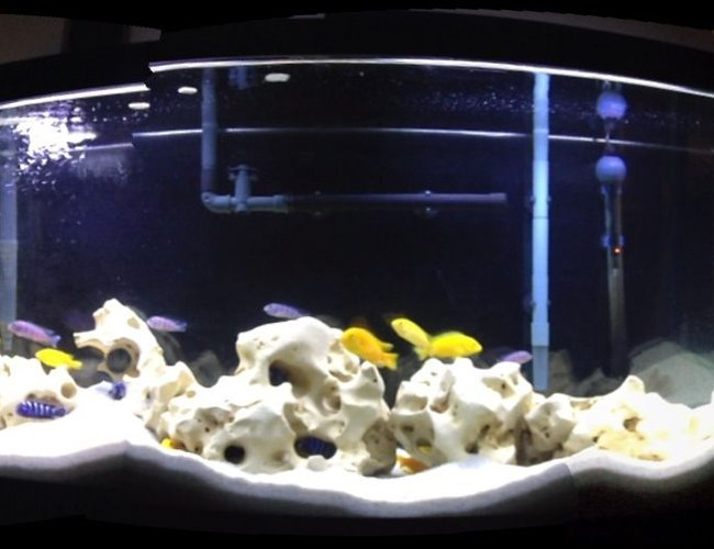 50 gallons freshwater fish tank (mostly fish and non-living decorations) - Malawi Cichlids