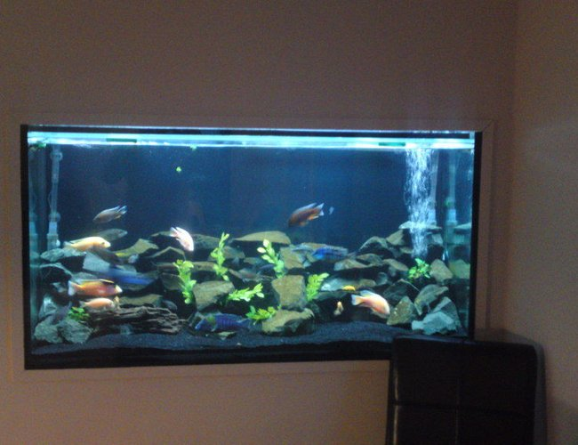 84 gallons freshwater fish tank (mostly fish and non-living decorations) - my tank