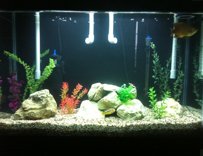 45 gallons freshwater fish tank (mostly fish and non-living decorations) - My 45 Gallon Tall Cichlid Tank.