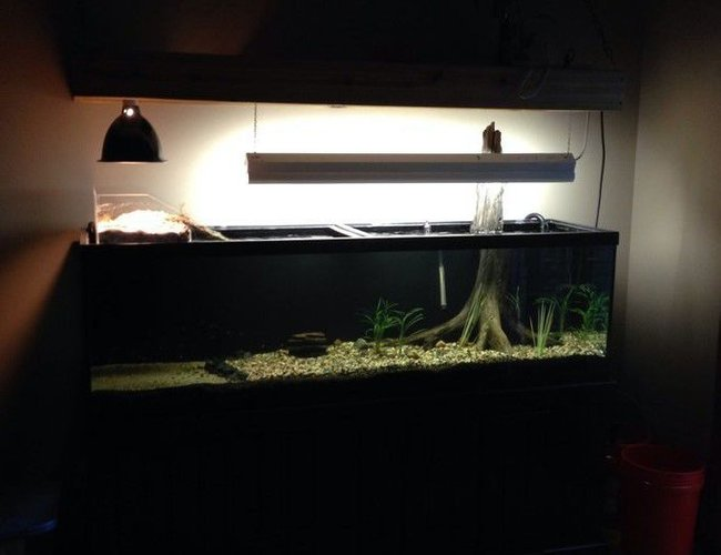 125 gallons freshwater fish tank (mostly fish and non-living decorations) - 125 gallon freshwater with custom above tank turtle basking area