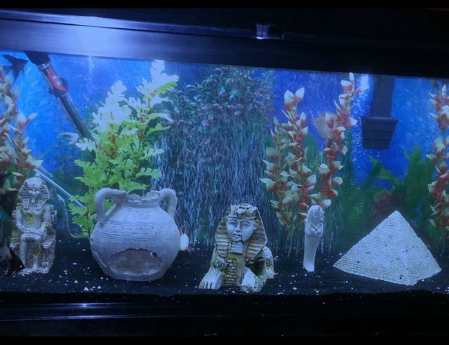 50 gallons freshwater fish tank (mostly fish and non-living decorations) - My 50 gallon fresh water tank.