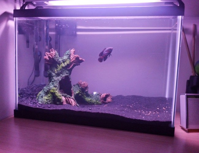 20 gallons freshwater fish tank (mostly fish and non-living decorations) - Last sunday I took 1,0 of tafil and suddenly I had the urge to go to petco.
