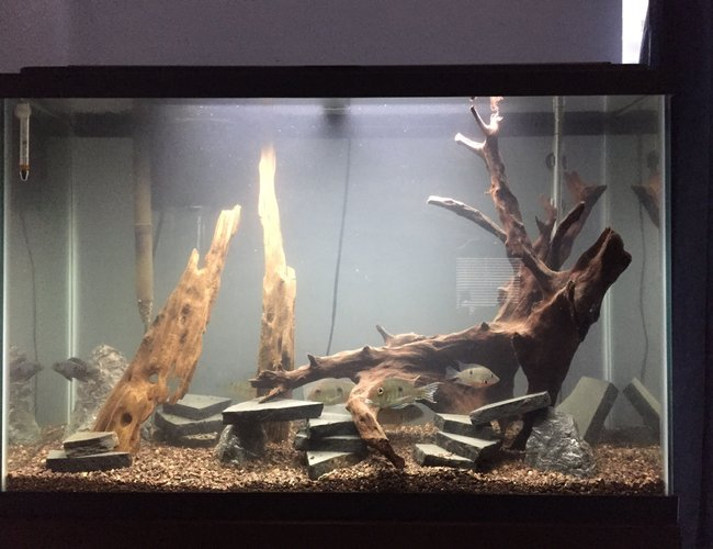45 gallons freshwater fish tank (mostly fish and non-living decorations) - My 45 gallon tank.