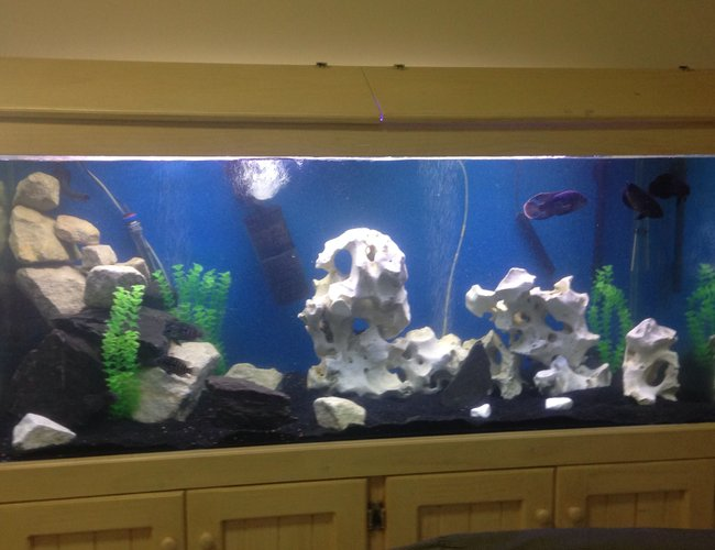 68 gallons freshwater fish tank (mostly fish and non-living decorations) - 6ft x2x2