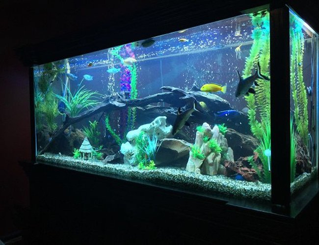 68 gallons freshwater fish tank (mostly fish and non-living decorations) - 850lt