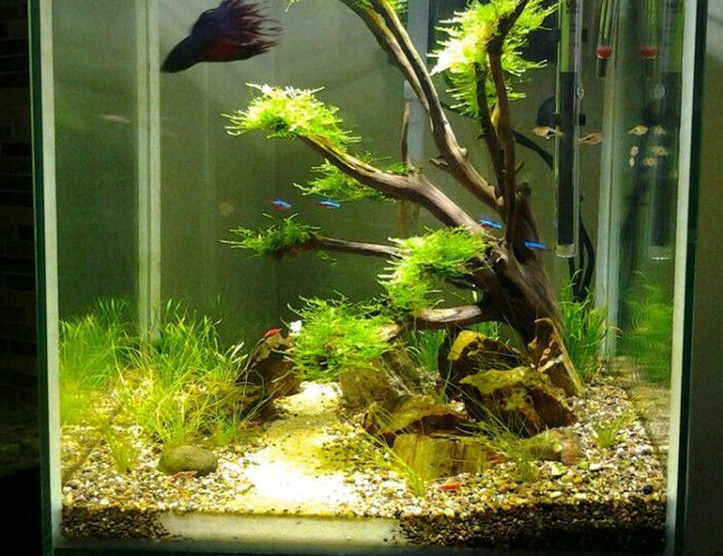 80 gallons freshwater fish tank (mostly fish and non-living decorations) - 18 gallon semi-planted cube