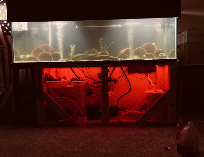 250 gallons freshwater fish tank (mostly fish and non-living decorations) - What do you guys think?