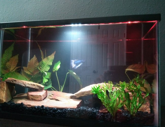 6 gallons freshwater fish tank (mostly fish and non-living decorations) - Betta planted tank