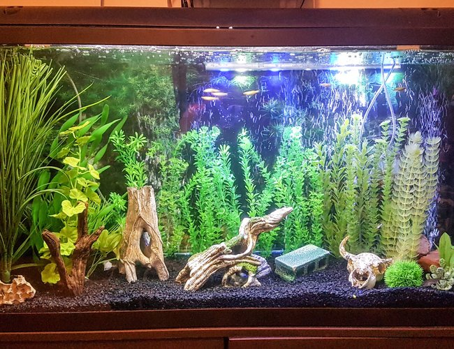 75 gallons freshwater fish tank (mostly fish and non-living decorations) - My 75 gallon freshwater community tank