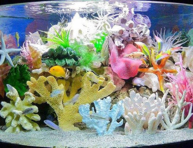 120 gallons freshwater fish tank (mostly fish and non-living decorations) - Made believe sea tank
