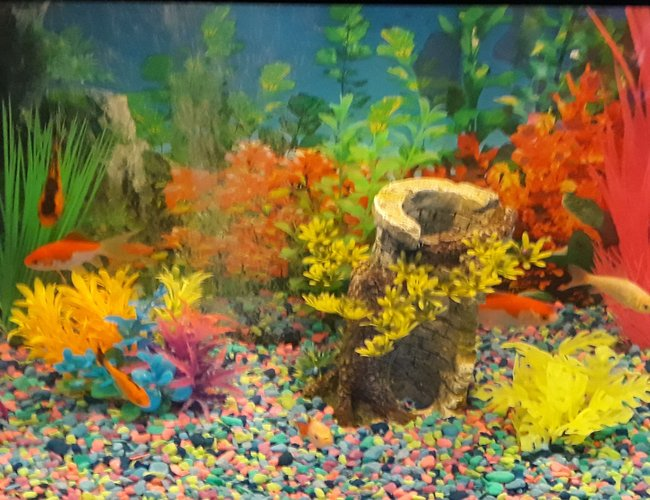 20 gallons freshwater fish tank (mostly fish and non-living decorations) - Goldfish