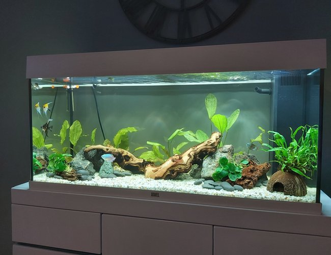 39 gallons freshwater fish tank (mostly fish and non-living decorations) - 17th October 2020