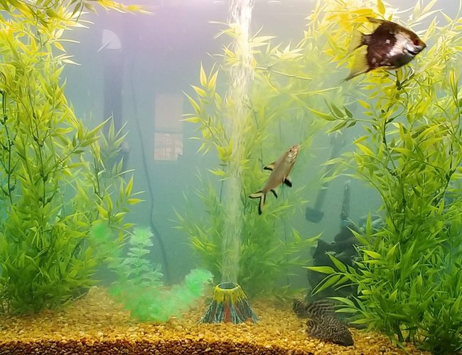 65 gallons freshwater fish tank (mostly fish and non-living decorations) - Jordison Ocean
