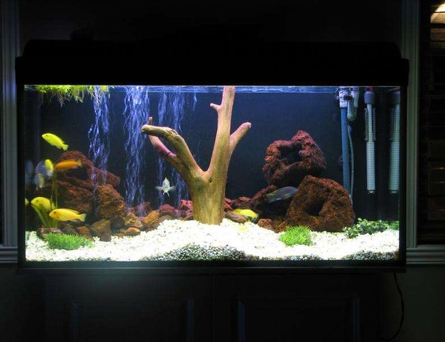 50 gallons freshwater fish tank (mostly fish and non-living decorations) - 50g with wood and fake plant