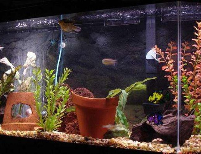 101 gallons freshwater fish tank (mostly fish and non-living decorations) - 52