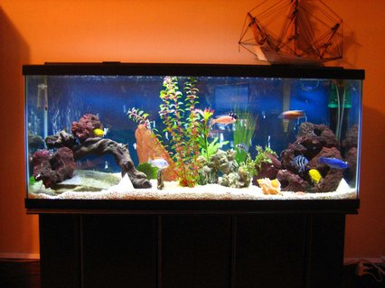 Rated #26: 55 Gallons Freshwater Fish Tank - Say Hello to my Little Friends
