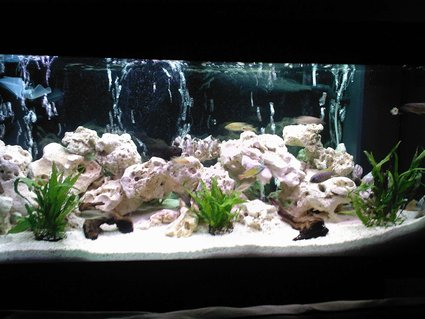 Rated #25: 40 Gallons Freshwater Fish Tank - my 180L malawi tank