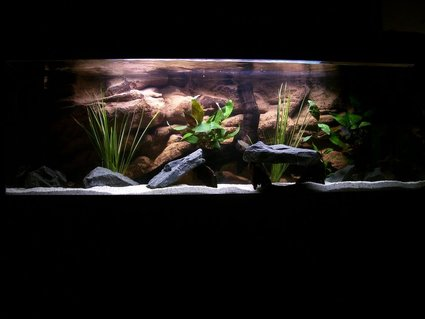 Rated #36: 132 Gallons Freshwater Fish Tank - Nolans new tank. comments welcome!